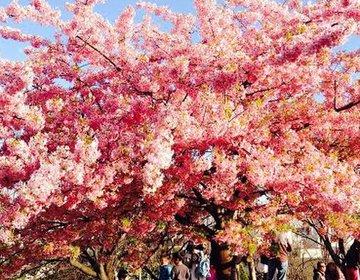 【おしゃれさんが通う街】花見もできる!代官山で春ならではの楽しめるデートプラン!