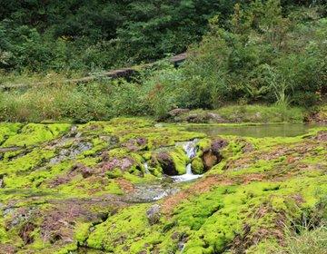 そこはエメラルドグリーンの世界!チャツボミゴケ公園の景色は、ここでしか見られない幻想的な姿だった!