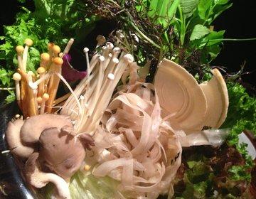 【六本木ヒルズで秋冬におすすめ鍋デート】女子受け間違いなしの野菜しゃぶしゃぶを食べてヘルシーに!