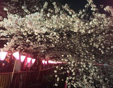 【完璧攻略!中目黒桜祭りデート】夜桜みながら食べ歩き&隠れ家テラスカフェ