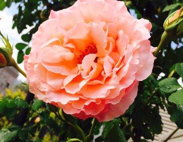 名古屋・栄にある無料スポット「久屋大通公園」「庭園フラリエ」で癒しを吸収♡