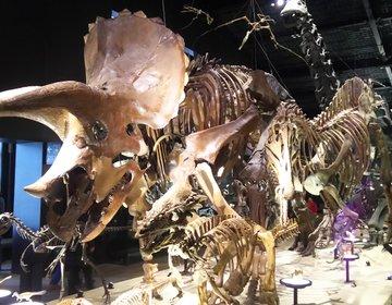 サザエさん一家も訪れた!恐竜の郷、熊本県御船町で太古のロマンに触れる旅~温泉もあります!~