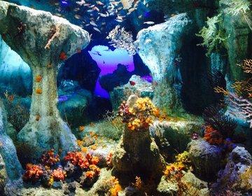 【雨の日にオススメ】まったりデートでサンシャイン水族館へGO!!