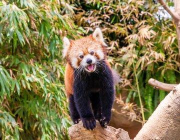 満足度が高い〇〇すぎる動物園!天気関係なしで遊べる「神戸どうぶつ王国」に行ってきた!