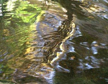 【美しい池、新緑と鯉を水亭にて楽しむ】八方全て美しい 八芳園庭園で安らぐ。