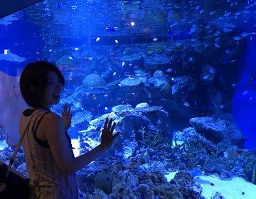 都内で最も都会にある水族館?!アクアパーク品川は大人から子供まで楽しめる施設★