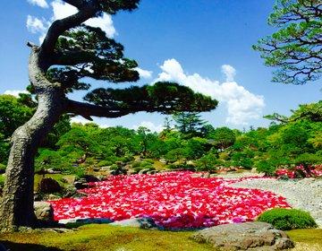 【行くなら5月の連休中】牡丹の敷き詰められた日本一美しい絶景を楽しむなら大根島の由志園牡丹祭りへ