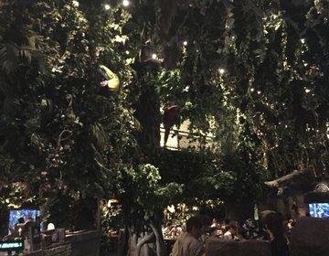 【イクスピアリグルメ】え、ジャングル!?「Rainforest Cafe」で思い出に残る食事を!