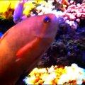 新江ノ島水族館(Enoshima Aquarium)