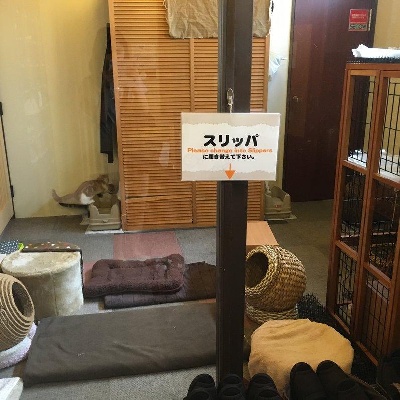 猫の居る休憩所299