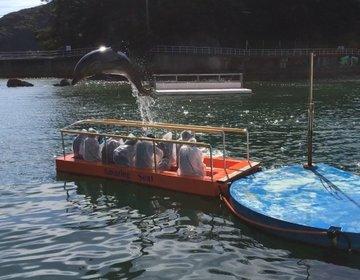 【西伊豆】動物たちと触れ合える水族館とまるで海外リゾートな海の堪能コース