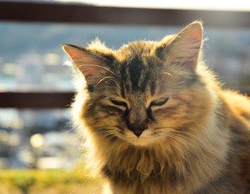 【猫好きさんにおすすめなスポットNo.1!】尾道を120%楽しむための観光モデルコース