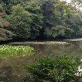 明治神宮御苑 (Meiji Jingu Gyoen)