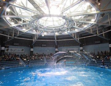 【東京・品川】エプソン アクアパーク品川 雨の日もOK!デートにおすすめな水族館