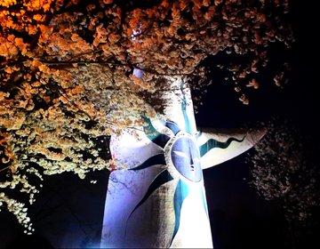 【満足度120%】大阪の桜といったらココ!万博記念公園の桜は昼と夜で2倍楽しめる!