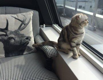 【雪・雨の日は、暖かいお部屋で猫ちゃんに癒されよう。】渋谷のおすすめデートコースです◎