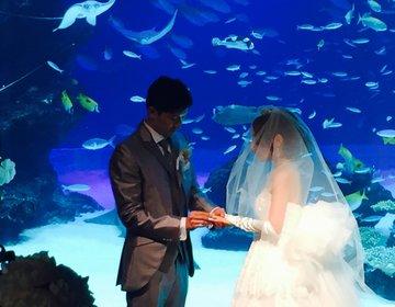 池袋サンシャイン水族館を貸切!ロマンティックな結婚式とサンシャイン60での極上披露宴♡