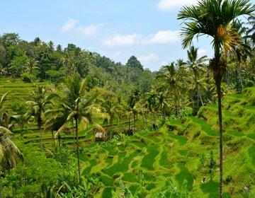 【インドネシア・バリ島】ウブドを散策!寺院や緑の棚田を眺めるランチ、イチオシ買い物スポット♪