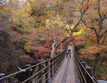 秋の茨城、今が紅葉真っ盛り!もみじ寺に袋田の滝、竜神大吊橋、花貫渓谷・・・茨城紅葉巡り♪