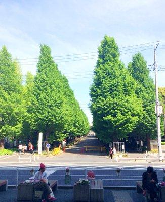 東京急行電鉄株式会社 東横線日吉駅