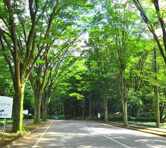 DIC川村記念美術館