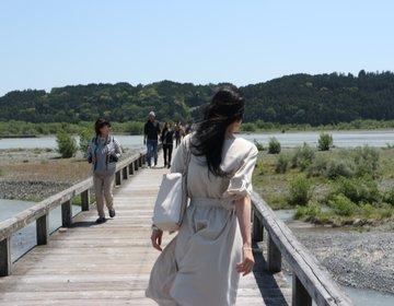 静岡の宝!【海のルビー☆桜えび!】ここでしか味わえない♡島田の【世界一の橋】とバラの公園♡