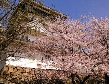 【北九州】桜まつりからSTART! 春に楽しめる北九州グルメ