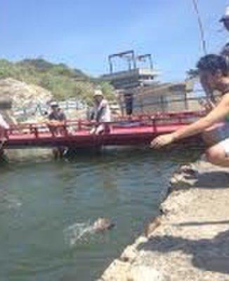 太海フラワー磯釣センター