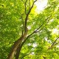 井の頭恩賜公園 (Inokashira Park)