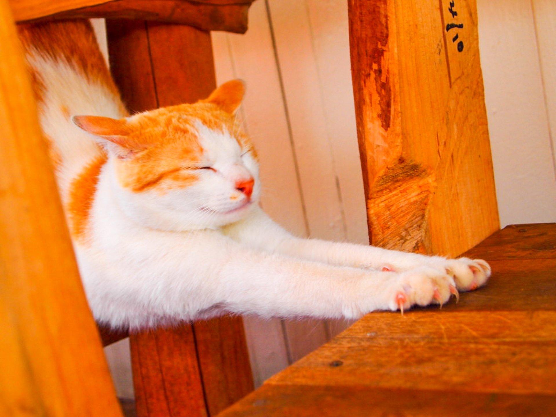 【カメラ女子必見】可愛い猫がいる穴場スポット6選!猫の島や猫駅長、看板猫などすぐに会いに行きたくなるスポットまとめ!