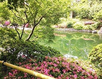 都会のオアシス「目白庭園」四季を感じる散歩道…今秋には俳優☆大浦龍宇一様のイベントも!!