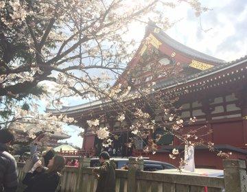 【お花見もできる浅草のいいとこ取りデートプラン】有名天丼や花やしき、浅草寺、夜桜まで盛り沢山!