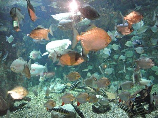 世界淡水魚園