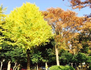 【秋におすすめお散歩デート】千駄ヶ谷の意外な楽しみ方!穴場スポット満載?!
