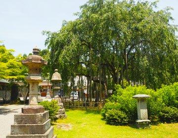 リフレッシュしたいなら足羽山へ!【福井市足羽山・満喫プラン】緑に神社におしいいもの♪