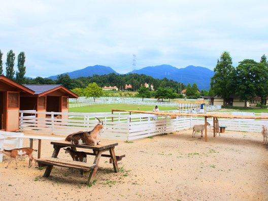 滋賀農業公園ブルーメの丘