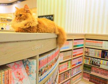 ゲームや漫画も楽しめる猫カフェ!?京都・河原町に夢のような進化系猫カフェがオープン!