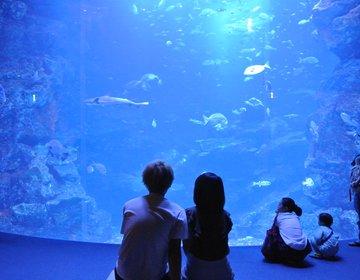 【京都デート】夕方から京都水族館でオトナなデートを♡