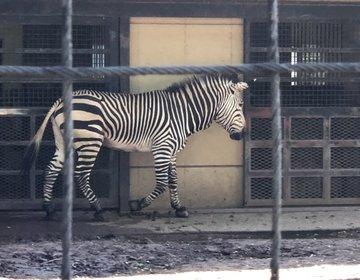 鹿島田には崖の上に無料の動物園があるんだって!〜「田」のつく駅旅 第①弾〜