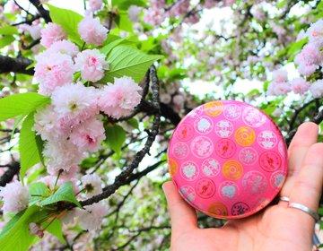 【約130種・約350本の桜が舞う!】期間限定開催の大阪造幣局桜の通り抜けは行かなきゃ損!