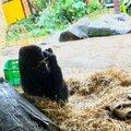 上野動物園 (Ueno Zoo)
