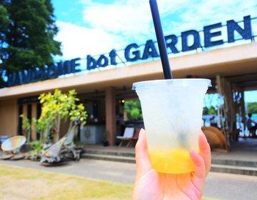 関西景色のいいカフェに選ばれた!長居公園に咲くひまわり畑と穴場カフェで過ごす最高のなつやすみ!