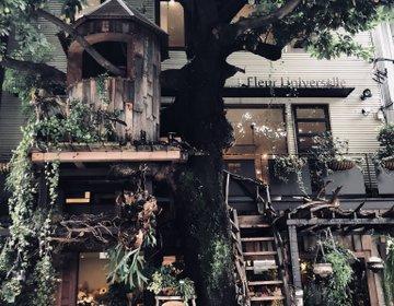【広尾】まさかの木の上にカフェ!?雰囲気抜群の穴場スポット♪