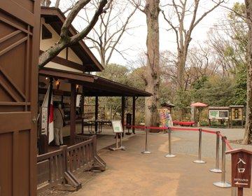 しだれ桜の名所、和歌をテーマにした雅な日本庭園、六義園。ライトアップの時期は特におすすめ。