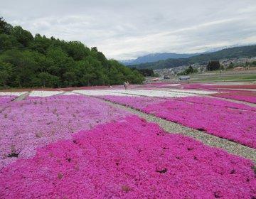 【新潟・魚沼】越後三山と楽しむ16万株の芝桜!花と緑と雪の里で開催中「魚沼芝桜まつり」