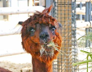上野動物園で秋を感じる!フォトジェニックな秋っぽい動物まとめ