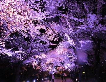 【新潟・上越】約4000本の桜が咲き誇る!日本三大夜桜・高田公園でお花見しよう!!
