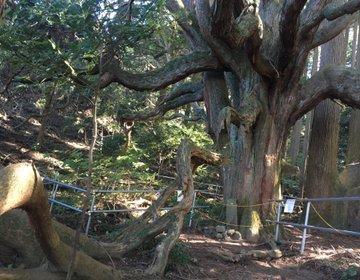 熊本県奥阿蘇の2大パワースポット‼︎ 福岡から片道約2時間で神秘的な空間へ