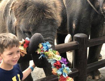 バリで両親と旅行なら、日本語ペラペラガイドと楽々ツアーがオススメ!ゾウに乗れてサンセットディナーも!