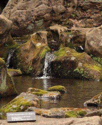六義園 滝見の茶屋